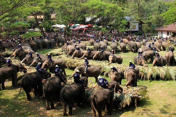 Maesa elephent camp, Travel to Chiang Mai